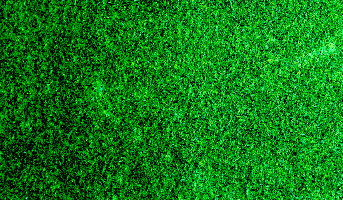 Reasons to Choose Sod Over Seed