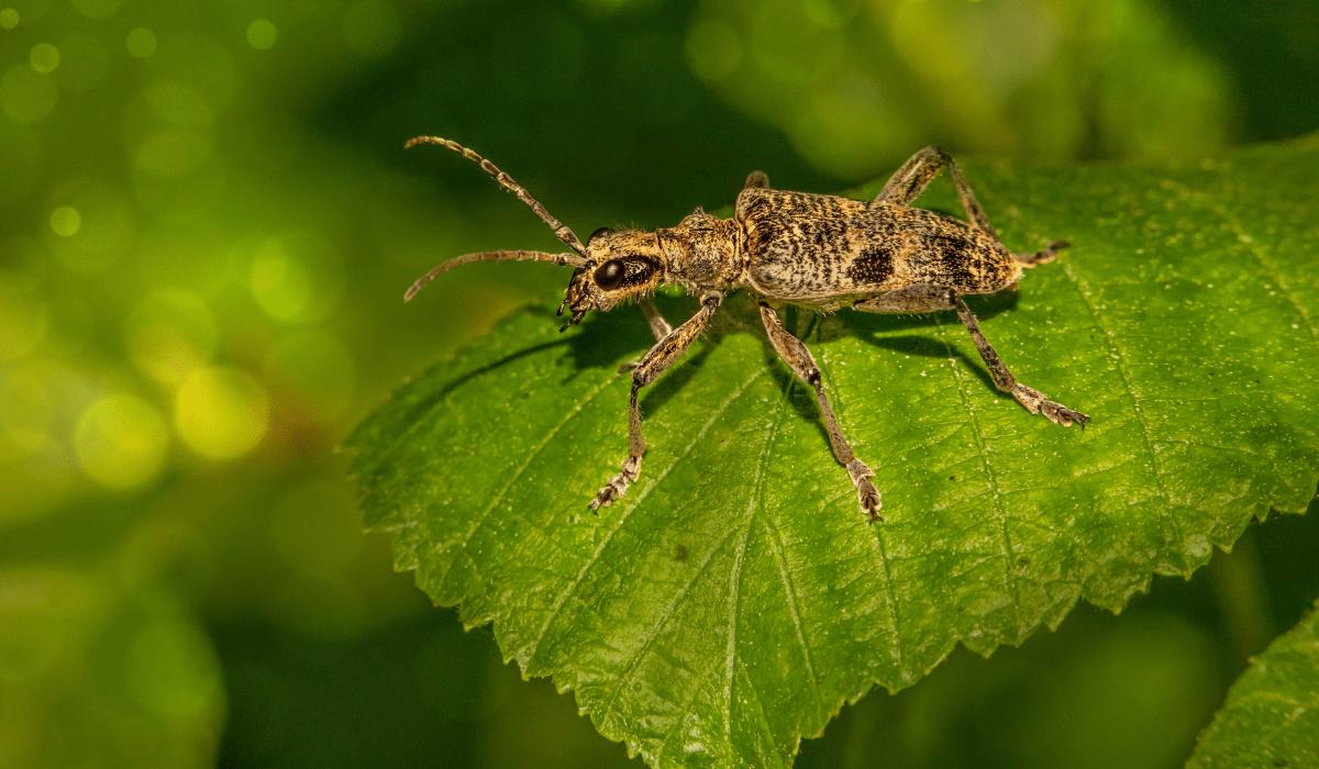 Common Tree Pests