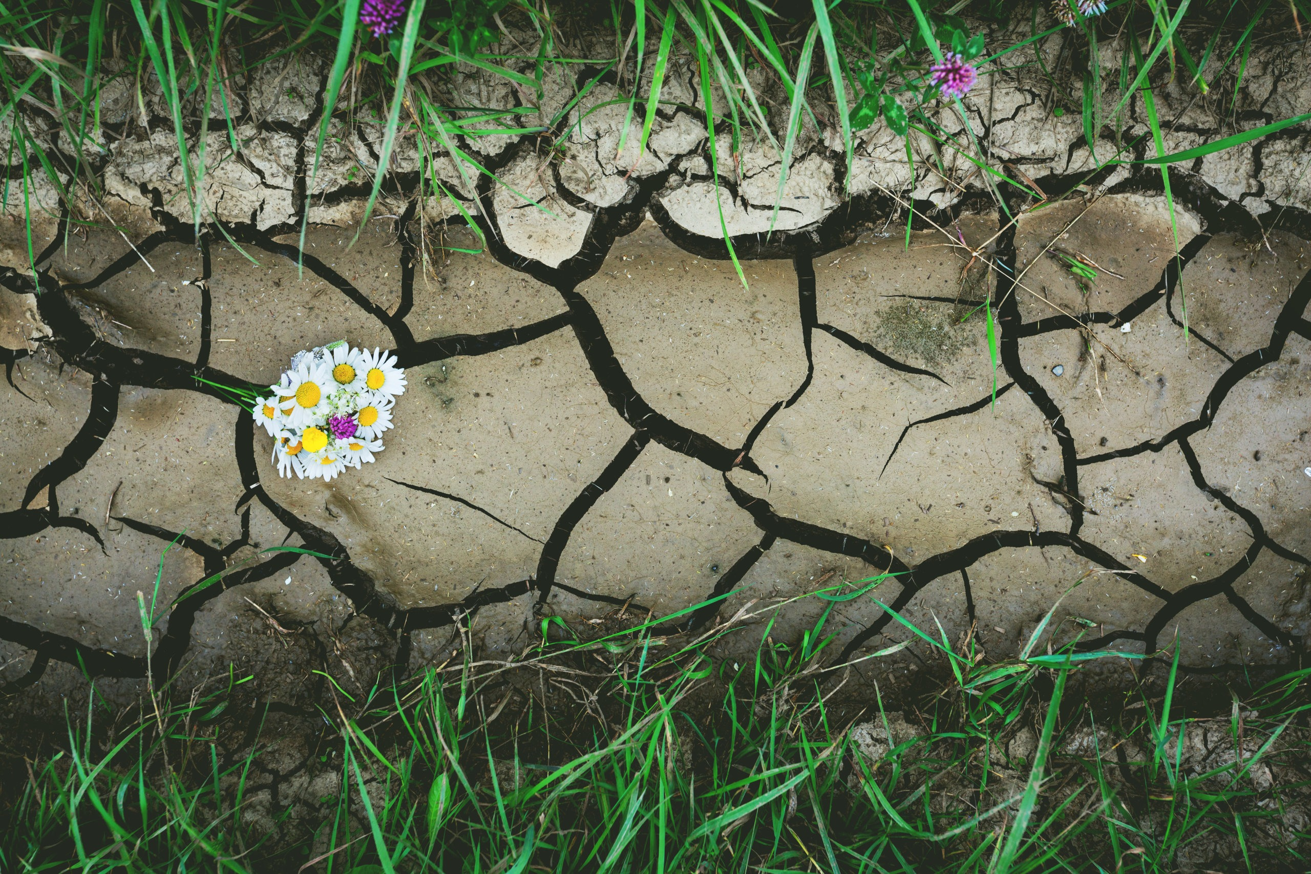9 Drought Tolerant Grasses For A Tough & Beautiful Lawn